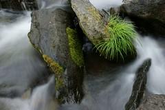 River Garden (tsubame) Tags: japan rivers saitama ranzan  japanesenature