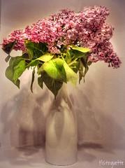 Bonne fte (mistinguette.mistinguette) Tags: flowers stilllife fleurs lilac vase naturemorte lilas