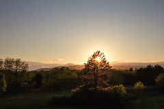 Another day (Francesca Vinzia) Tags: wood light sunset italy panorama sun tree green nature field landscape twilight