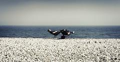 Sunday Roast (Bruus UK) Tags: blue sea summer holiday seascape hot beach coast marine couple alone sitting bright pentax relaxing pebble dorset reclining tanning sunbathing lymeregis deckchairs partners