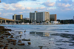 Clearwater Skyline (Emily Kistler) Tags: bridge blue sunset sky reflection bird beach gulfofmexico water animal skyline architecture clouds buildings boats outdoors evening dock nikon rocks gulf florida d750 blueheron clearwater