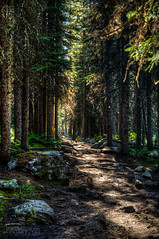 Follow the Path (Troy Johnstone) Tags: trees nature way walking hiking path sunbeam banffnationalpark consolationlakes