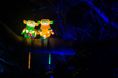 Cheeky Monkeys (RoosterMan64) Tags: lights vivid australia nsw tarongazoo