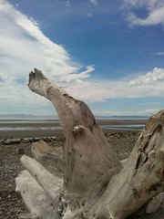 Driftwood at low tide... (Beeke...) Tags: ocean canada beach bc driftwood whiterock