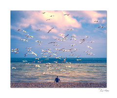 Fish for tea (Explored) (hehaden2) Tags: bluesky clouds beach pebbles gulls man brighton sussex topazrestyle