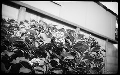 pearlette 1934  ReraPan100-127 (Tokyo Amigo) Tags: blackandwhite monochrome  1934 127film  4x65 negativfilm rokuohsha pearlette    rerapan100