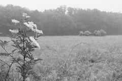 A foggy morning (Carsten aus Bonn) Tags: nokton voigtlnder 25mm