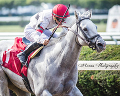 Chief Lion (EASY GOER) Tags: park horse sports canon track belmont racing 5d races equine thoroughbreds belmontpark markiii 5dmarkiii