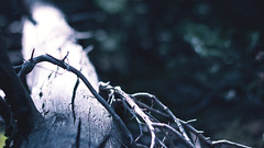 Hanging On For Life (mhall231) Tags: light mountains color tree nature photoshop canon outdoors photography evans woods colorado mt dof bokeh lightroom fores t4i