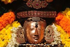 Lord Nataraja (Kapaliadiyar) Tags: india madras chennai nataraja tamilnadu southindia mylapore kapaleeswarartemple cosmicdancer mylaporetemple mylaporekapaleeswarartemple lordnataraja myilai kapaliadiyar mylpore kapaleeswarartemplemylapore kingofdancers