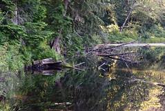 Hayward Lake (careth@2012) Tags: trees lake reflection water reflections nikon scenery view britishcolumbia scenic atmosphere scene wilderness 55300mm nikond3300 d3300
