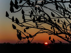 a little bit of paradise (TimsTolalPhotography) Tags: sunset nature silhouette sumac