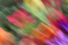 ICM abstract: diagonally blurred floral colours (Jon Dev) Tags: icm intentionalcameramovement