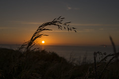St Brides Bay Pembokeshire (Darren Cordingley) Tags: sunset sea sky wales skies dof depthoffield pembrokeshire pembrokeshirecoastalpath stbridesbay boket pembrokshirecoastnationalpark skoma nikond800nikon2870mm