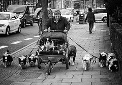 overloaded (White_V) Tags: street blackandwhite woman dog london dogs walking carriage holloway overloaded