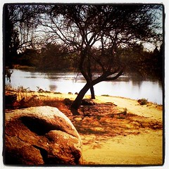 Rive Gauche (Tjpytheas) Tags: tree landscape southafrica veld parys orangefreestate iphoneography