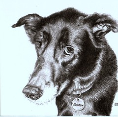 Valentine The Dog (Intheartroom!) Tags: original portrait dog pet eye art pencil nose drawing valentine collar