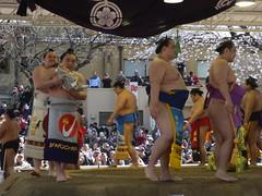 日馬富士 画像10