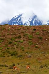 Torres Del Paine (Antonio Vaccarini (vanto5)) Tags: chile trip travel panorama patagonia canon landscape torresdelpaine cile canonef70300mmf456isusm chileanpatagonia canoneos7d patagoniacilena antoniovaccarini