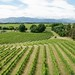 Highfield Estate Winery, Marlborough, New Zealand