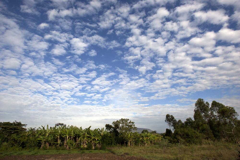africa-uganda-clouds-bananas-trees