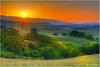 Golden State (philipleemiller) Tags: california sunset nature grass landscape cows hdr rollinghills portolavalley windingroads arastraderopreserve d7000 californiaoaktrees topazdetail galleryoffantasticshots trueexcellence1