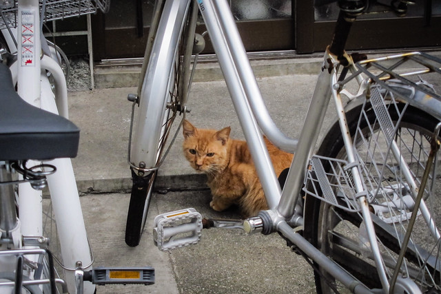 Today's Cat@2012-06-05