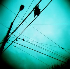 Crow and Cables (liquidnight) Tags: seattle blue sky green film birds silhouette analog mediumformat trafficlight washington holga lomo xpro lomography crossprocessed streetlight solitude alone kodak streetlamp dream surreal overcast powerlines cables wires perch pacificnorthwest dreamy analogue crow solitary vignetting ektachrome pnw corvid capitolhill alert sentinel corvusbrachyrhynchos 120n watchful corvidae e100sw