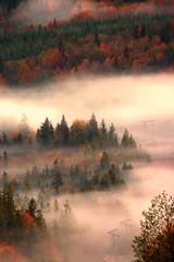 Autumn Mist (Peggy Collins) Tags: autumn trees mist mountain canada color fall misty bravo colorful fallcolor britishcolumbia foliage hydro getty poles sunshinecoast autumncolor hydropoles thisiscanada peggycollins