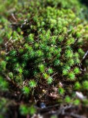 moss (M.J.H.) Tags: maine 2012 islesboro