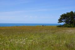 2012-05-26 05-28 Mendocino County 078 Fort Bragg, Mendocino Coast Botanical Gardens