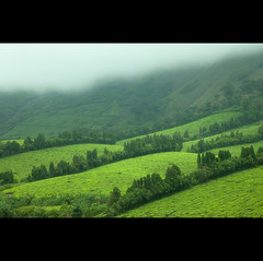 Nature is the art of God! (VinothChandar) Tags: mist color colour green art nature beautiful beauty fog canon landscape photography design photo cool colorful glow photos pics vibrant picture atmosphere hills greenery 5d colourful lush madurai tamilnadu megamalai