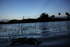 IMG_6750 (Kangeyan Kumaran) Tags: photography kulam marapaalayam ashokn