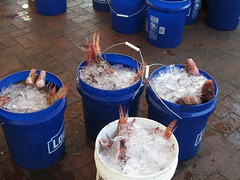 Buckets O' Lionfish (MyFWCmedia) Tags: florida wildlife conservation lionfish pensacola lrad fwc floridafishandwildlife myfwc myfwccom lionfishremovalandawarenessday