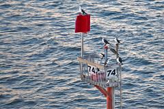 74 (scrumpy 10) Tags: ocean sea birds nikon australia melbourne australien scrumpy 74 d800 jacqualine scrumpy10