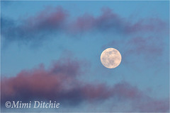 Full Moon And Pink Clouds (Mimi Ditchie) Tags: sunset sky moon clouds fullmoon pinkclouds