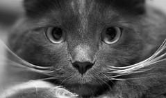 Look! (hokie311) Tags: blackandwhite bw pet cats pets monochrome animal cat blackwhite kitten kitty kittens monochromatic kitties blacknwhite bnw