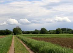 25-IMG_1672 (hemingwayfoto) Tags: flickr landwirtschaft natur himmel wolken fc landschaft wetter weg regionhannover