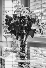 never the same again (pbo31) Tags: california flowers roses blackandwhite reflection window nature loss death spring flora nikon gray may bayarea bunch bloom vase eastbay livermore pleasanton alamedacounty 2016 liles boury pbo31 d810