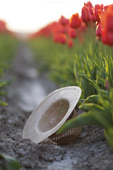(esmeecadoni) Tags: light sunset red sun sunlight holland nature netherlands hat backlight photography spring europe sundown bokeh outdoor sony minimal simplicity simple minimalistic littlethings tullips beautifulearth