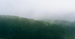 Hiders (fragrance190) Tags: a7rii mist path green dark