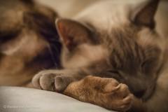 Pals (Renate van den Boom) Tags: james katten europa nederland thuis mack jaar gelderland 2015 maand 12december renatevandenboom