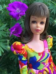 Francie (Foxy Belle) Tags: francie doll mattel vintage barbie brunette flip flowers garden outside magenta pink mod dress multicolored geranium sanguineum new hampshire purple bloody cranesbill