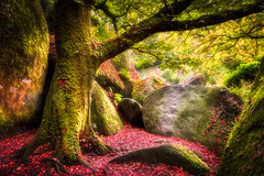 Huelgoat la magique [Explore 04/07/2016] (Lollivier Stphane) Tags: light red france tree automne rouge nikon bretagne explore foret arbre rocher finistere magique huelgoat d3200