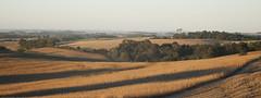 Rural Landscape (Arzivenkos) Tags: sunset pordosol rural nikon d70 farm wheat harvest paisagem agriculture fazenda trigo buclico agricultura safra lavoura colheita