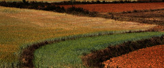 Crop Lines (cormend) Tags: travel red orange green field lines yellow trekking trek canon eos asia state hiking farm burma hike crop myanmar inle farmer southeast shan curve touring birmanie kalaw 50d cormend
