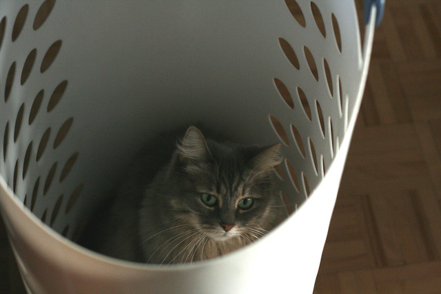 But why do I have to get out of the laundry basket?