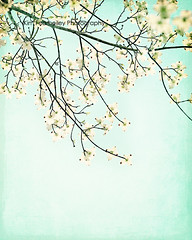 Dogwoods (KimFearheiley) Tags: memory cropped springtime dogwoods flipped florabellatexture kimfearheileyphotography