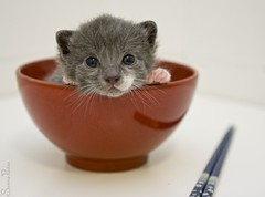 20110710_15483b (Fantasyfan.) Tags: red pet baby cute animal topv111 furry topv555 topv333 kitten small fluffy bowl tiny fantasyfanin unohdus highqualityanimals siirretty