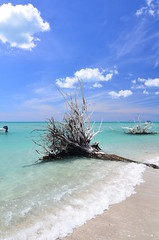 DSC_6700 (daisyj85) Tags: ocean sky tree beach water clouds lens nikon angle florida wide pass tokina stump fl englewood 1116mm d7000